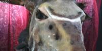 Tierkaschee (1)
